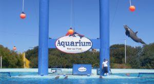 parque aquarium mar del plata